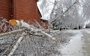 a fallen tree in an ice storm next to a building