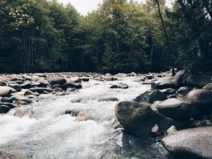 water flowing through rocks in the middle of a forest