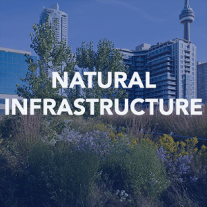 Natural Infrastructure Articles Icon